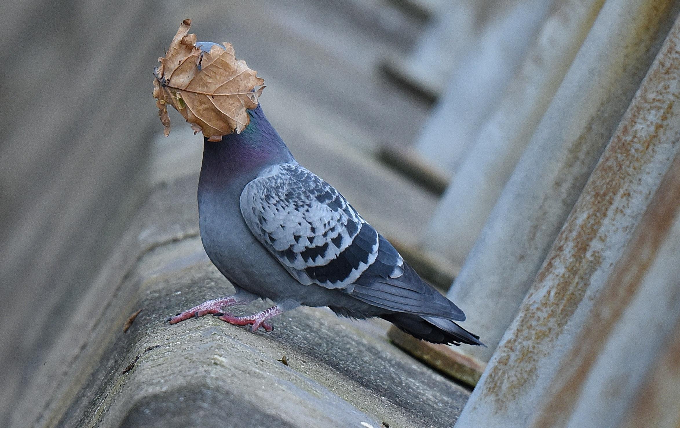 Seekor burung ketutupan burung