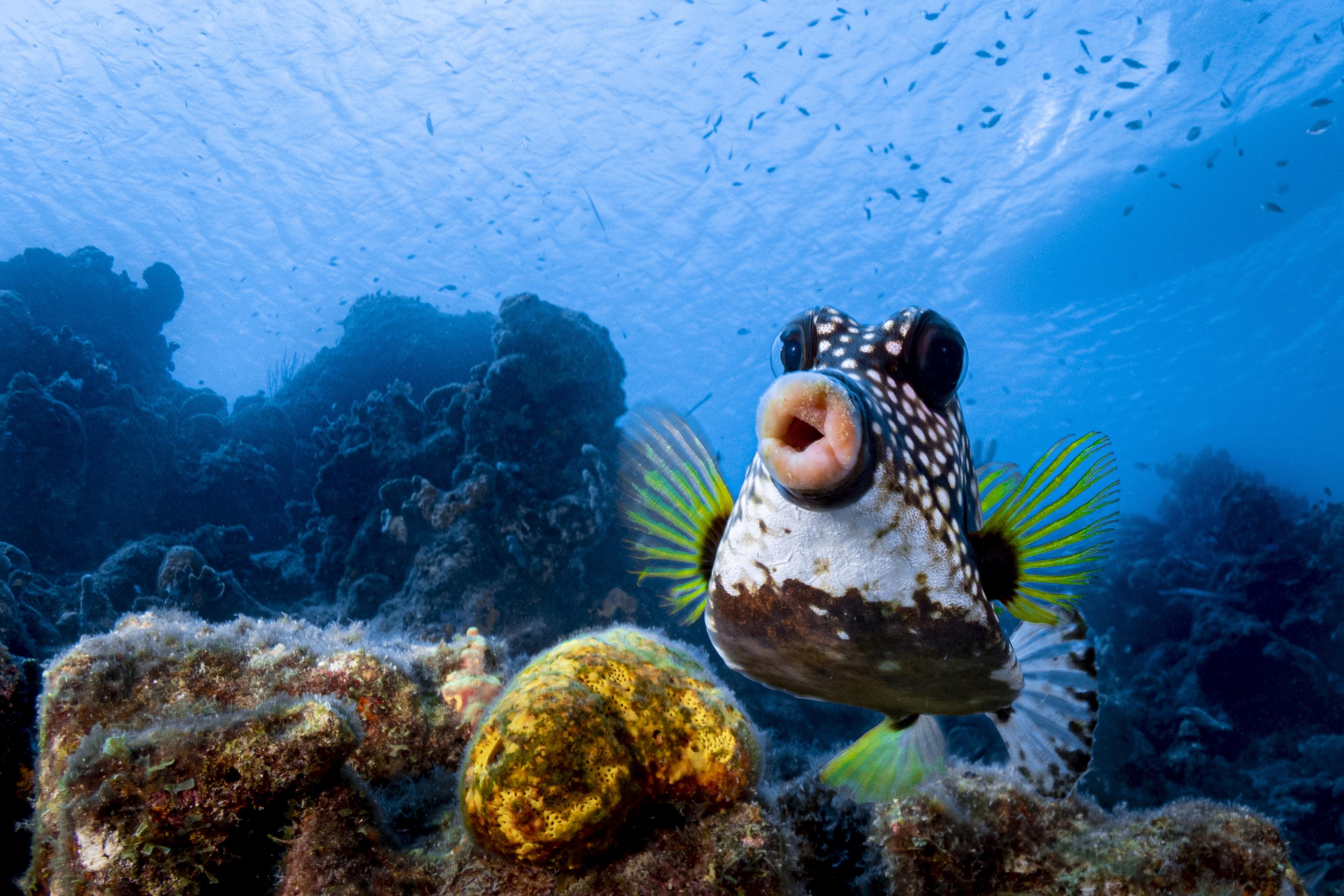 Seekor ikan berpose dengan mulut monyong
