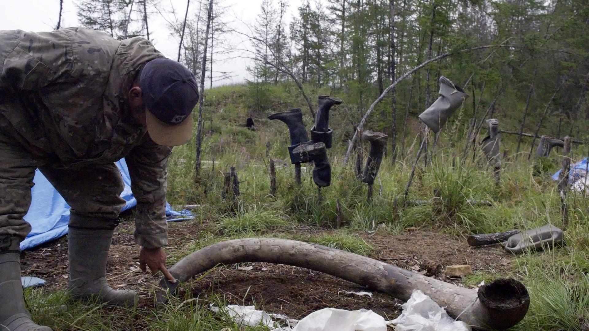 Lelaki memeriksa gading mamut.