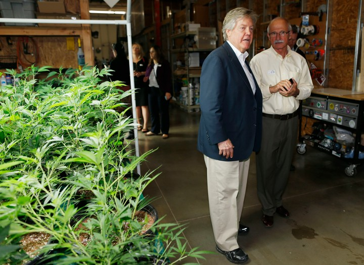 Meet the Nevada Politician with a Pot Strain Named After Him