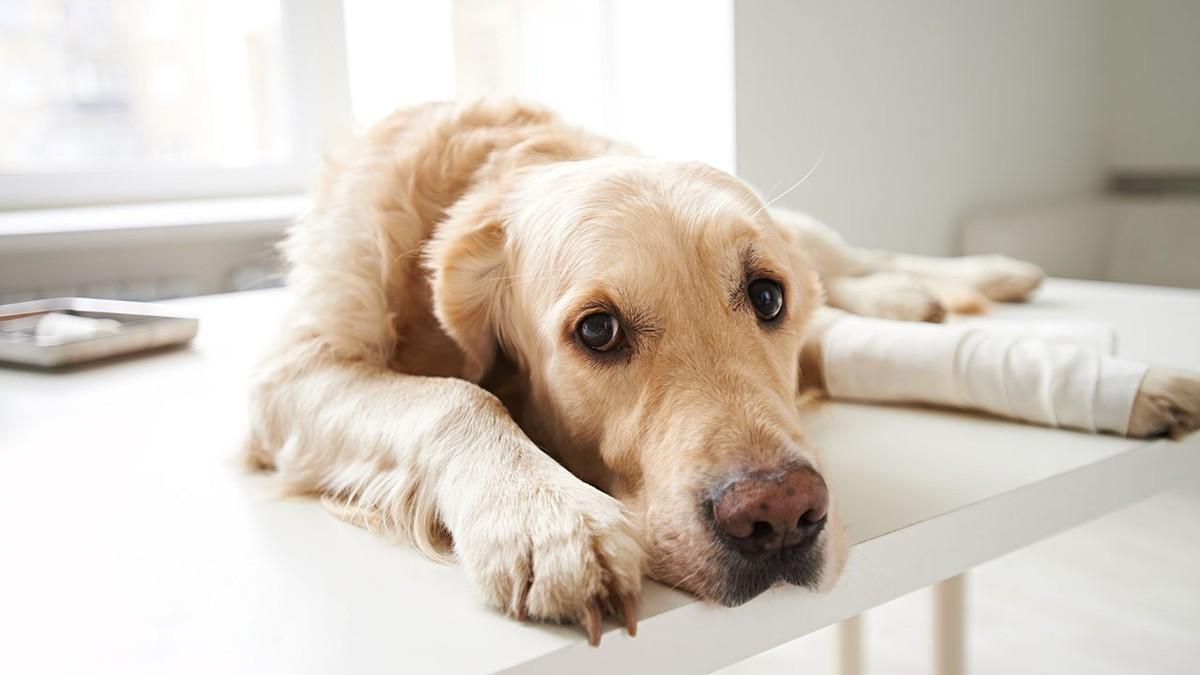 dog bone cancer - 1000×667