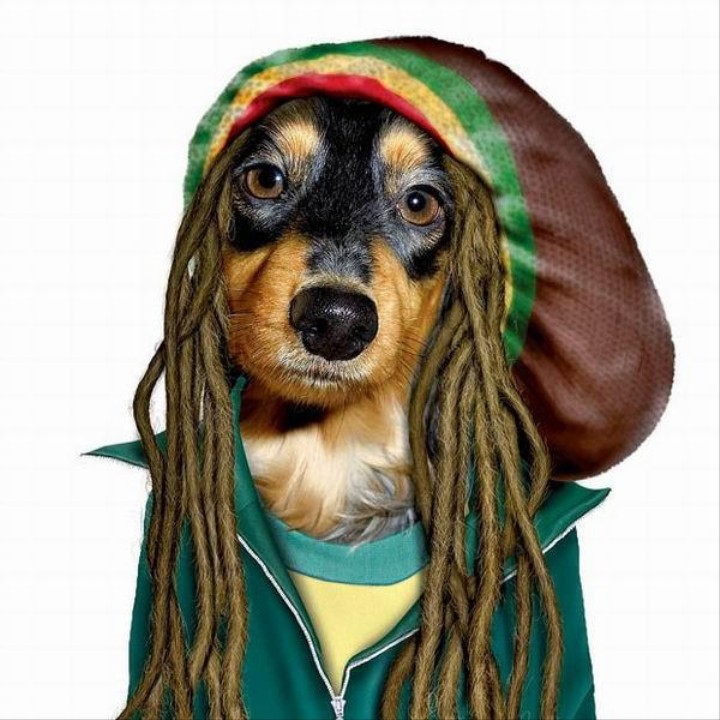 Do You Want to Make Friends with Dogs? Play Reggae