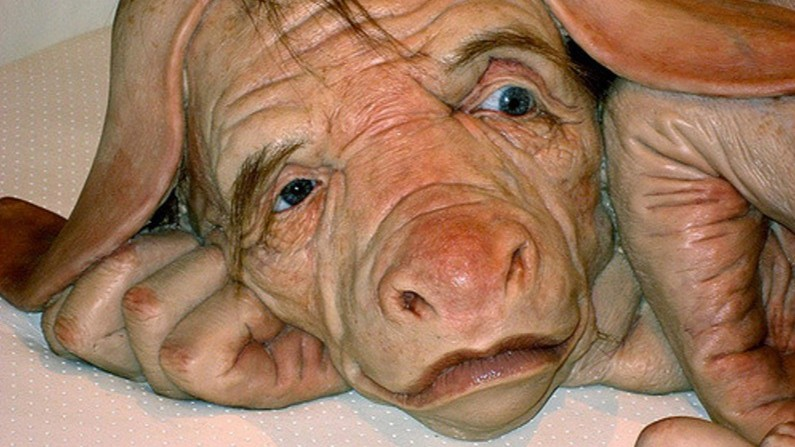 Was It Wrong for Scientists to Create a Pig-Human Hybrid Embryo ...
