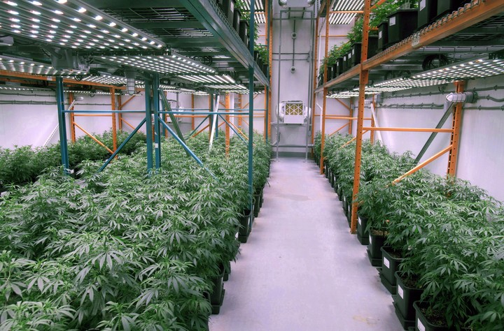 Can Pot Farms Save Former Oil Towns?