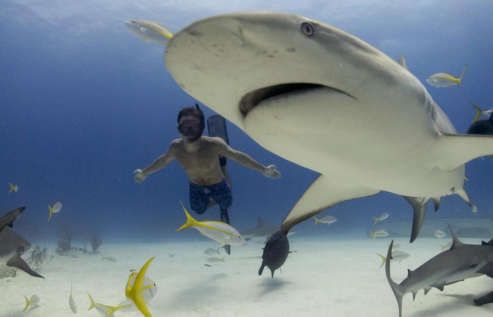 Thinking Port: Sharkwater: Extinction