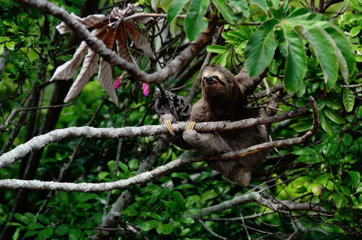 Let This Sloth Lead You to Paradise Through a Guided Meditation