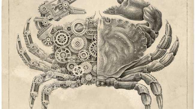 Ilustraciones anatómicas de cangrejos Steampunk - Creators