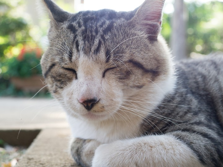 Cats Are Actually Nice, Scientists Find