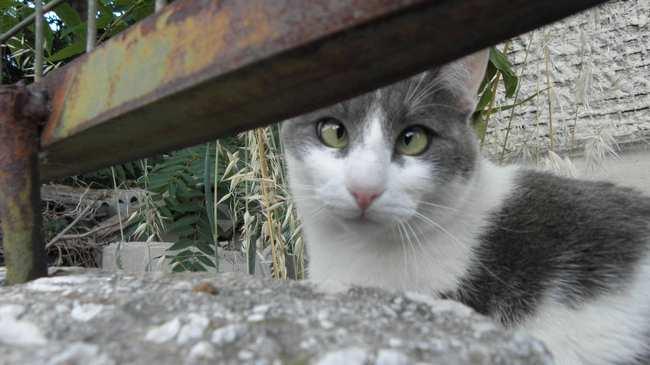 e2bc2804ec84 Μια Έρευνα Δείχνει Πόσο Λάθος Κάνουν οι Haters της Γάτας - VICE