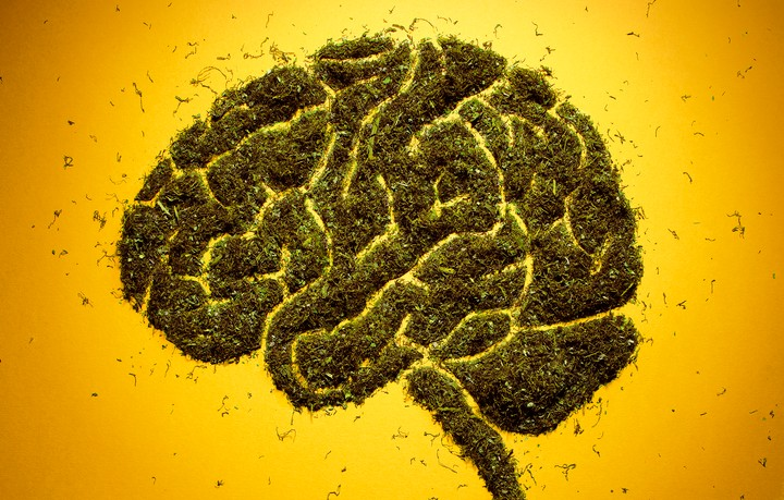The Brain Produces Its Own Version of THC