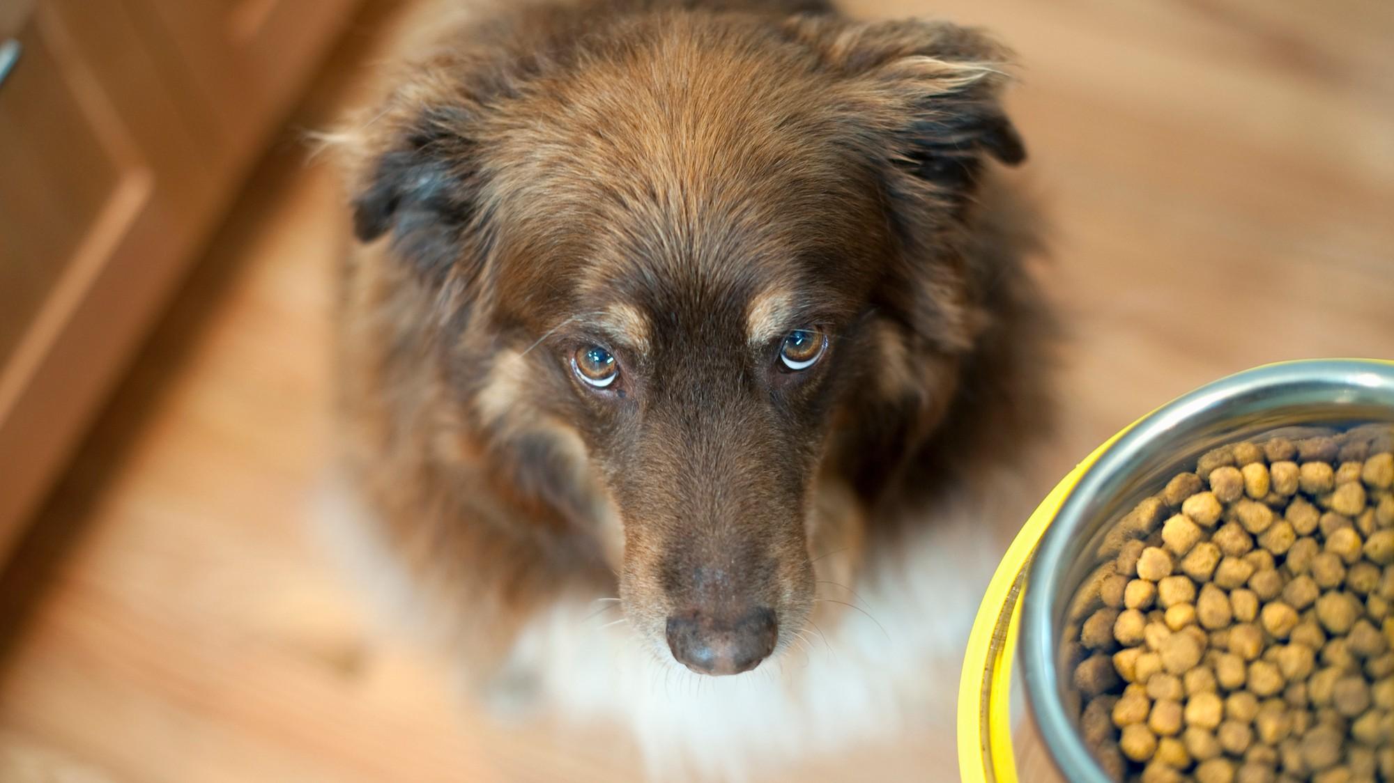 What Happens When a Human Eats Pet Food? - VICE
