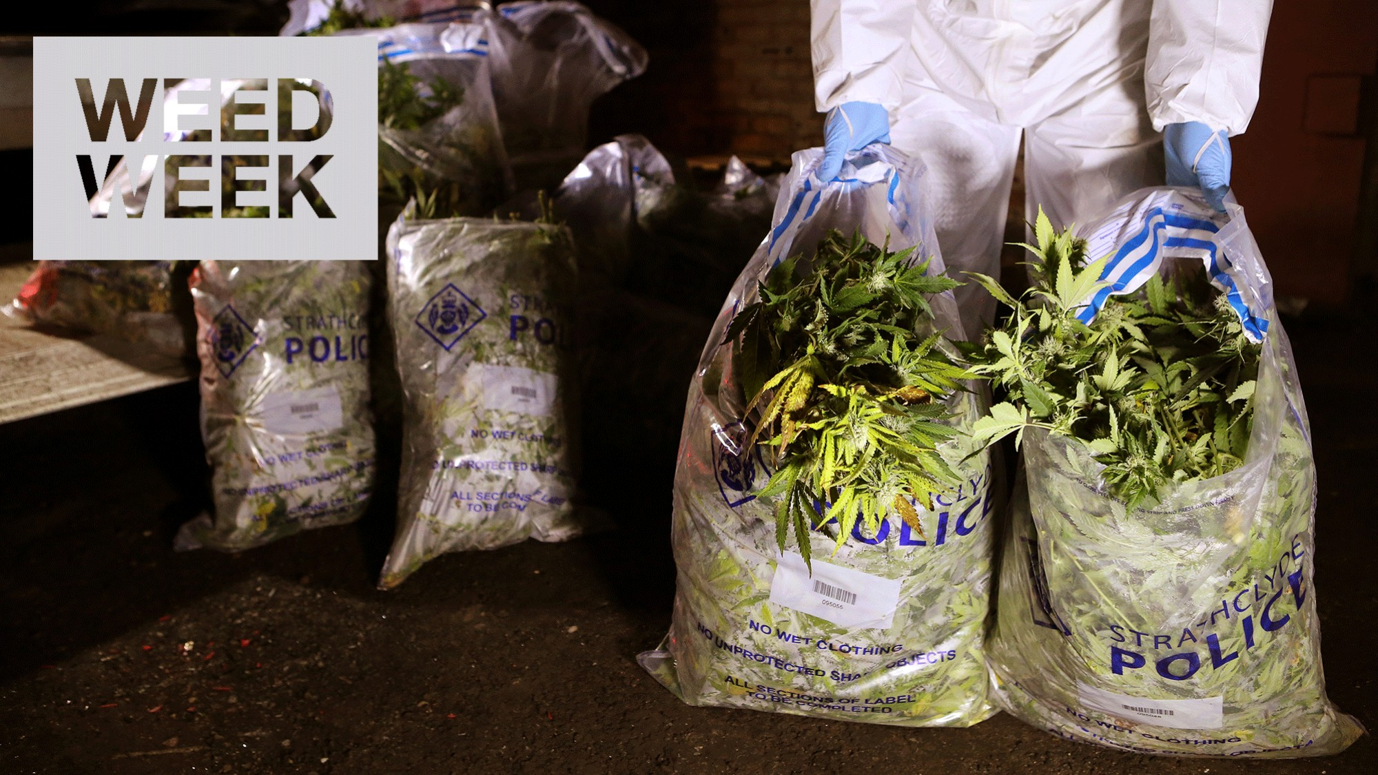 Are Police Too Skint to Control Britain's Weed Growing Industry? - VICE