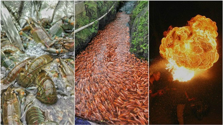 Indonesian Fish Farmer Captures the Beauty of Aquaculture in Photos