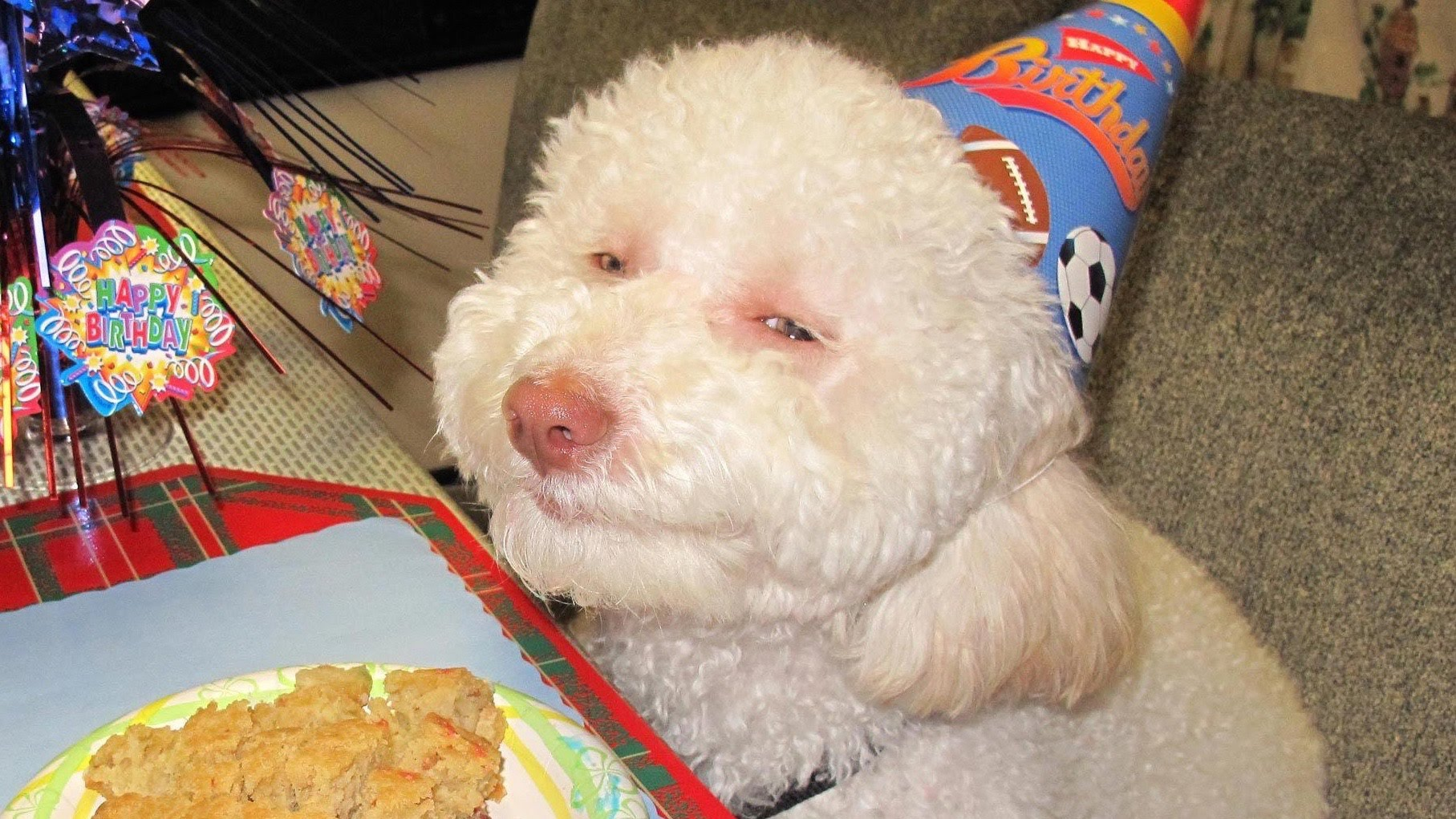 Can Dogs Get High How Marijuana Affects Dogs Motherboard