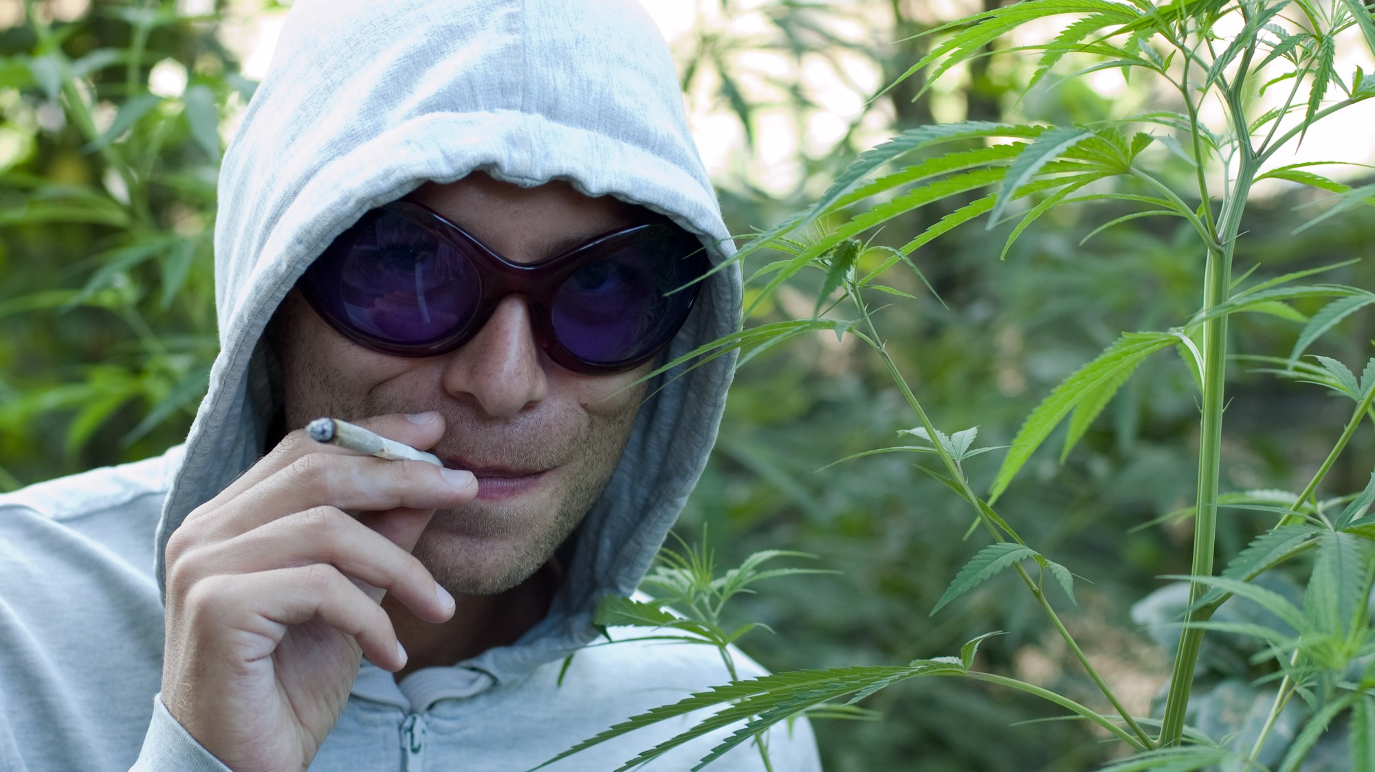 Ranking the Synonyms for Weed From Best to Worst - VICE