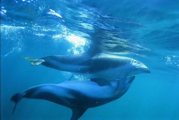 Biologists Make Dead Dolphins Have Sex in the Name of Science