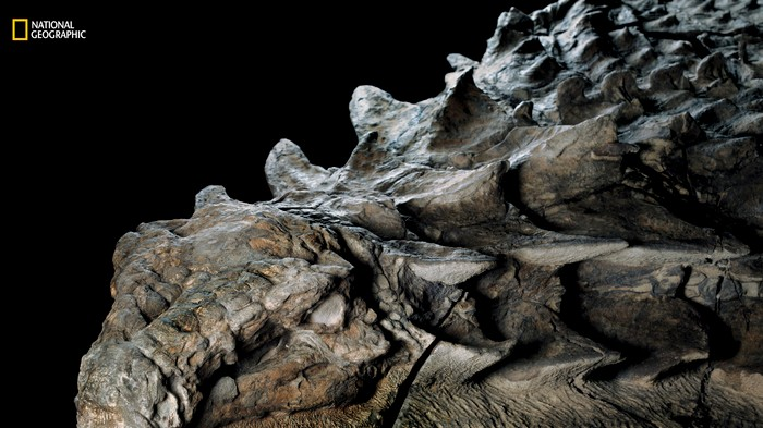 The 'Most Impressive' Dinosaur Fossil Just Got 3D Scanned