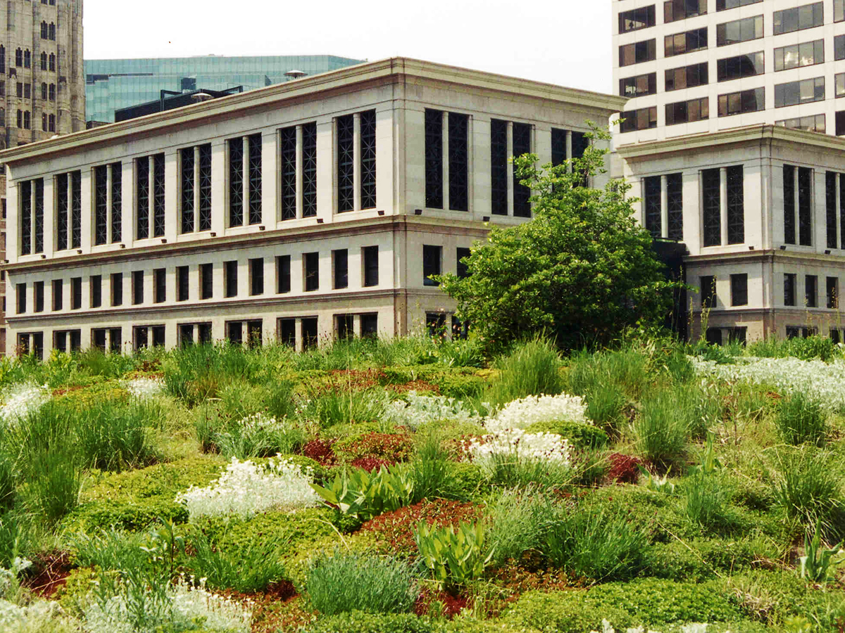 A Deadly Heatwave Turned Chicago Into The Countryu0027s Green Roof Capital    VICE Impact