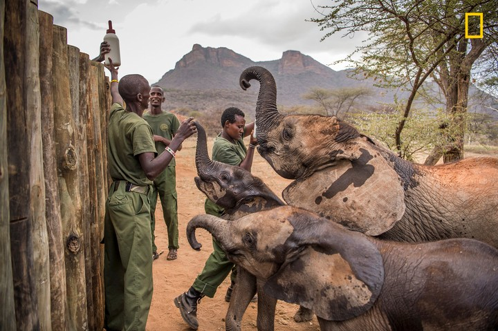 Heart-Melting Photographs Take You Inside an African Elephant Orphanage
