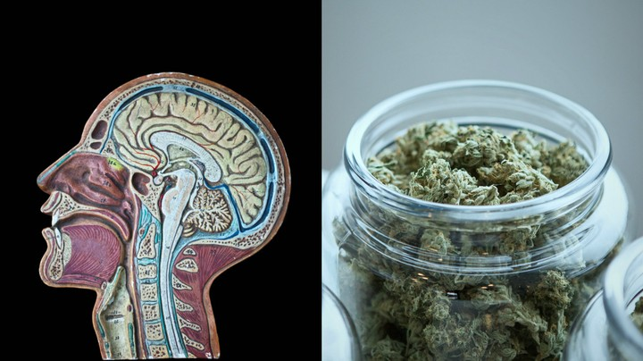 Weed Could Help Prevent Certain Brain Diseases
