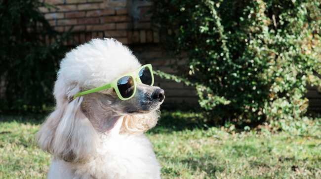 5b22b27cff1f Which Pets Are Cool With Your Period, According to Vets - VICE