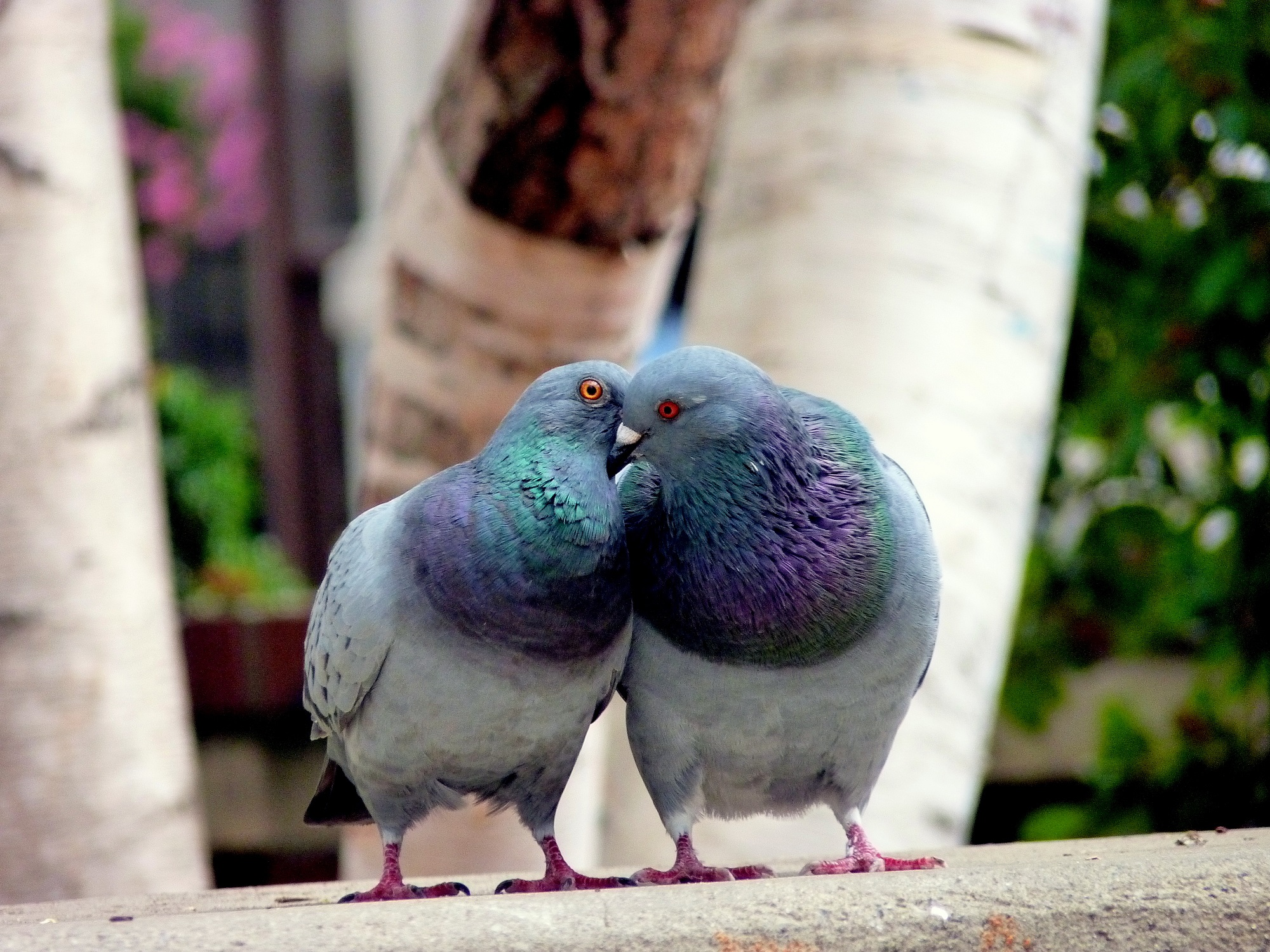 Birds of a feather dating apps