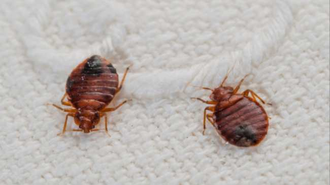 Will I Get Bed Bugs From Ing Used Stuff
