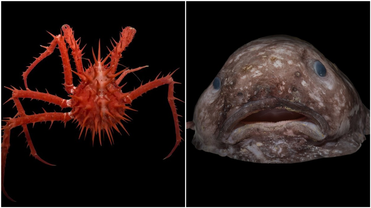 meet some of the insane creatures found in the deep sea vice