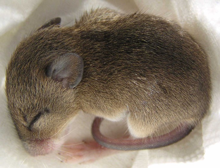 Scientists Used Light to Enhance Memories in Mice While They Slept