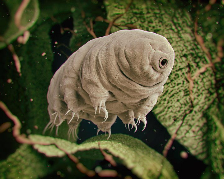 The Tardigrade Will Be the Last Living Thing On Earth - VICE