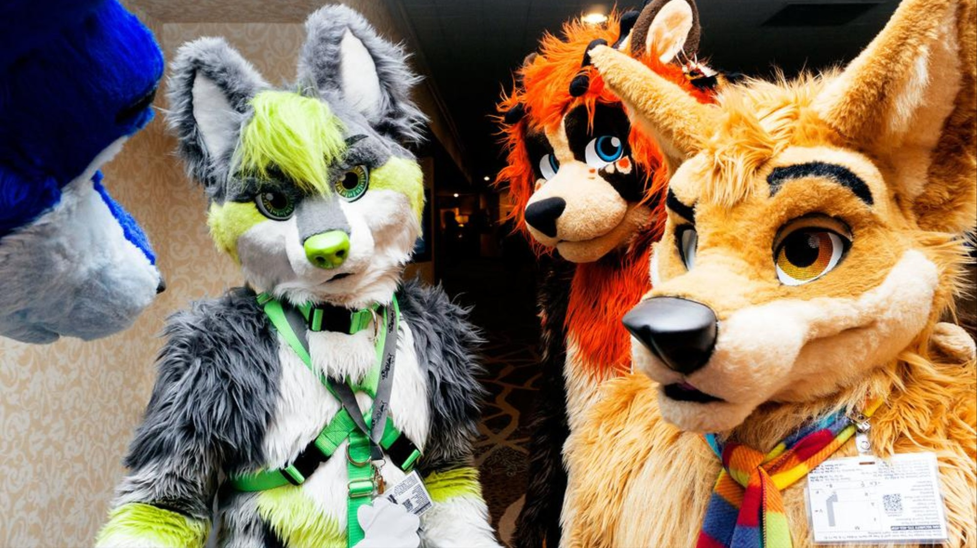 Who Makes Those Intricate, Expensive Furry Suits? - VICE