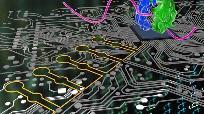 Perché questo batterio hackerato è la grande promessa della biologia programmabile