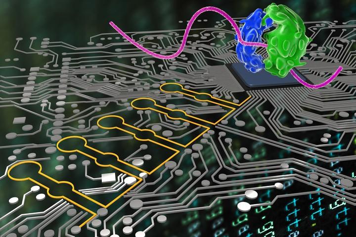 Perché questo batterio hackerato è la grande promessa della biologia programmabile - VICE