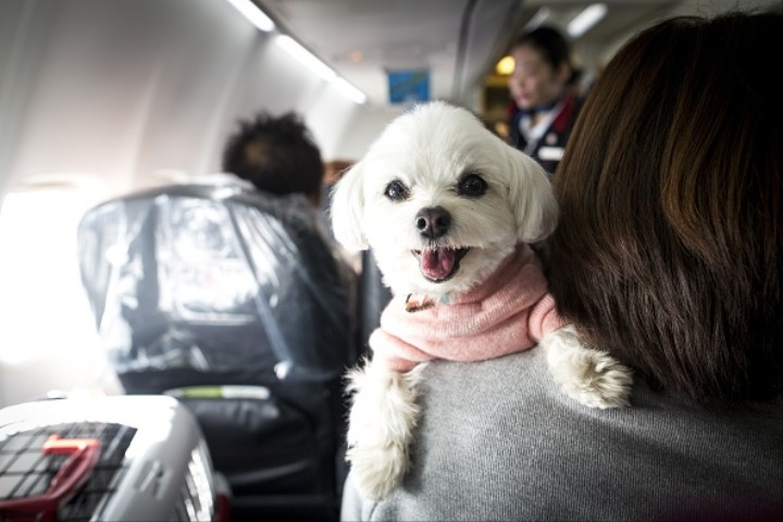 We See You, Fake Service Dog Owners