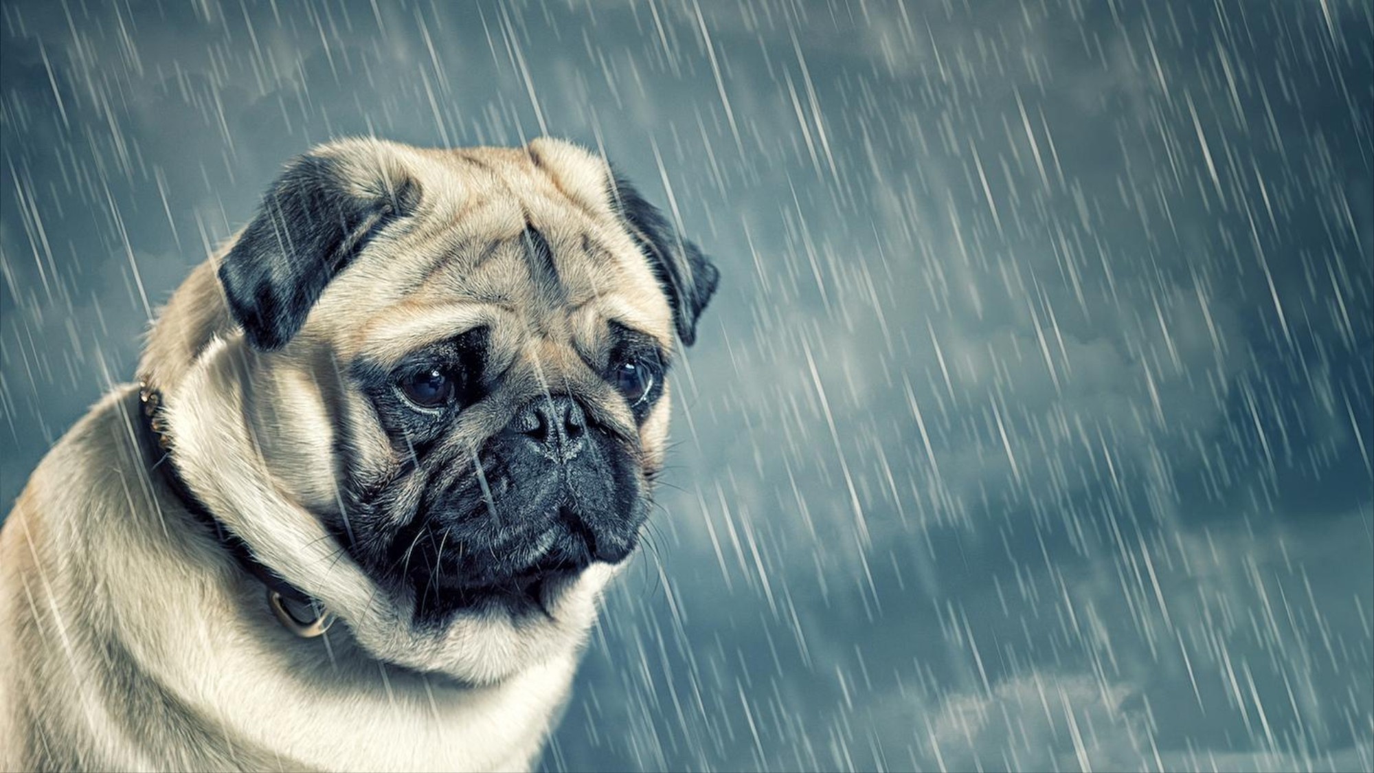 100 Gambar Anjing Galau