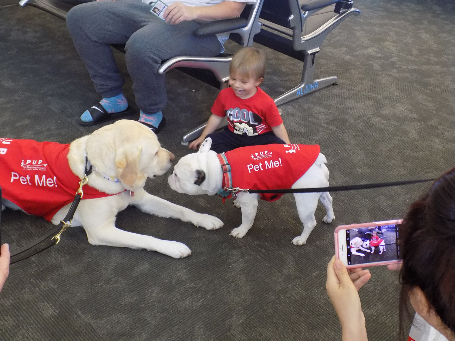 Meet The Good Dogs Making Air Travel Less Stressful