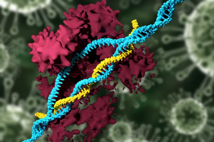 Genes Can Have Up To 80 Percent >> Crispr Can Now Edit Genes Using Nanoparticles Instead Of Viruses Vice