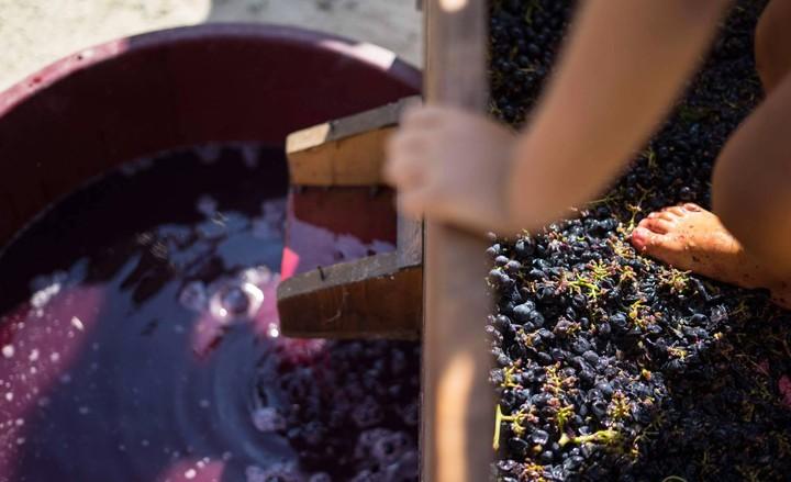 Non tutta l'uva diventa vino, per fortuna