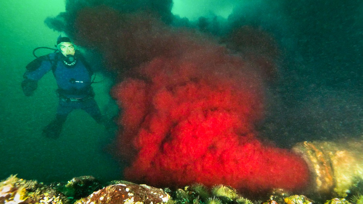 Watch a Pipe Spewing Blood Into a British Columbia Channel