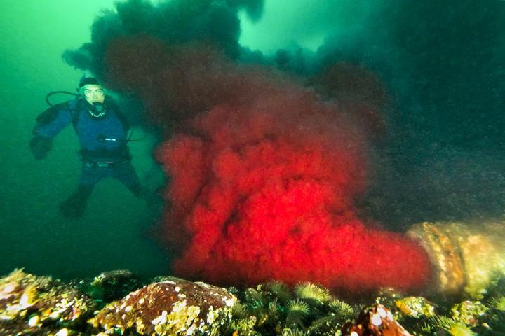 Guarda un tubo che sputa sangue in un canale del Pacifico