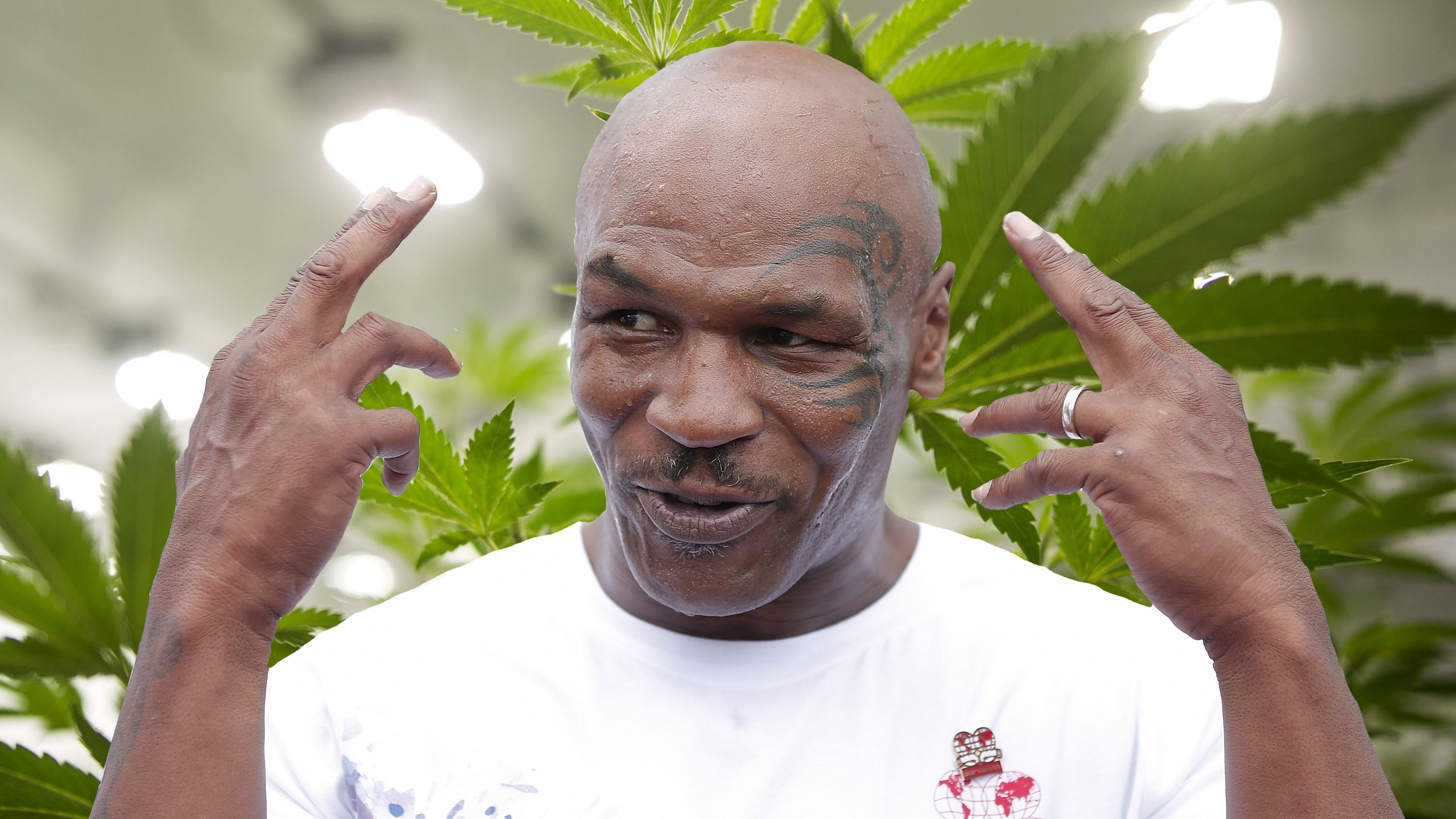 Image result for Mike Tyson land in california