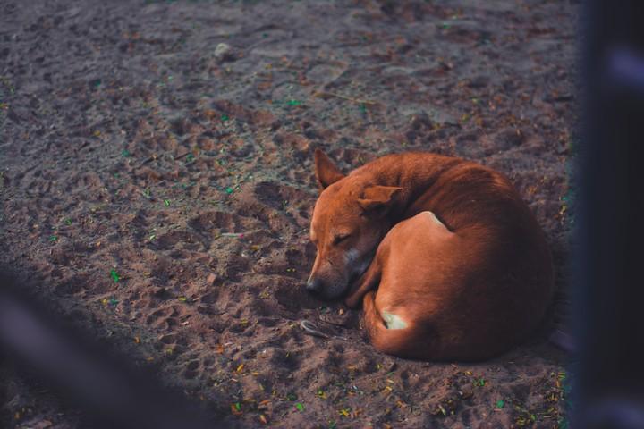 Inteligência artificial ajuda a localizar cães e gatos perdidos do Brasil