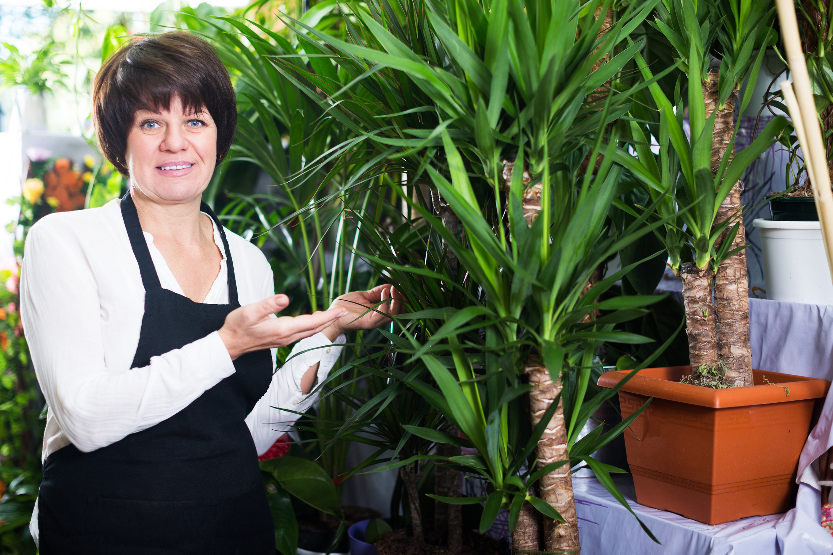 People Are Getting Ear Injuries From Yucca Plants