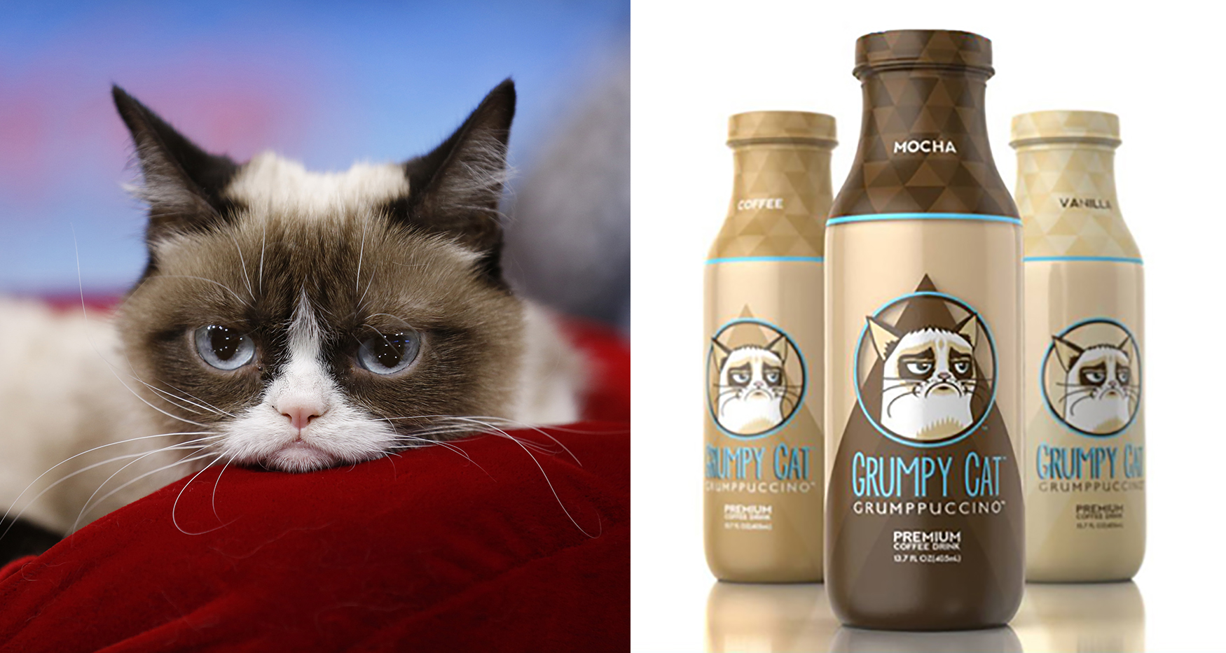 Grumpy Cat, Who Is Richer than You'll Ever Be, Awarded $710K in Coffee Lawsuit