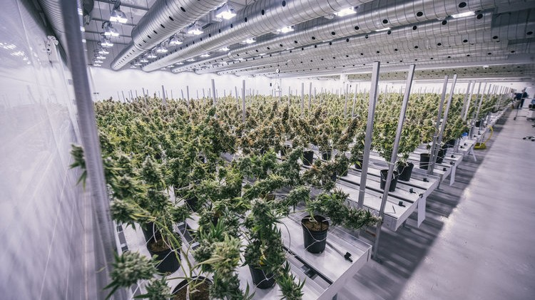 The world's largest weed company wants to list itself on the Nasdaq