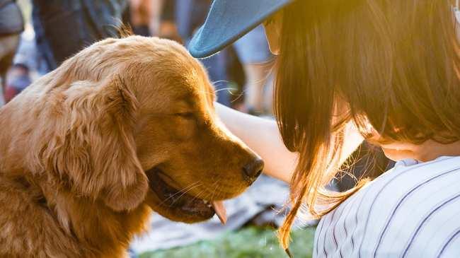 Bedwelming Rouwen om je hond kan nog zwaarder zijn dan om een mens - VICE &XY13