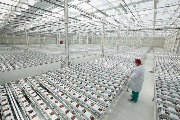 I Went on a Tour of America's Biggest Legal Weed Factory