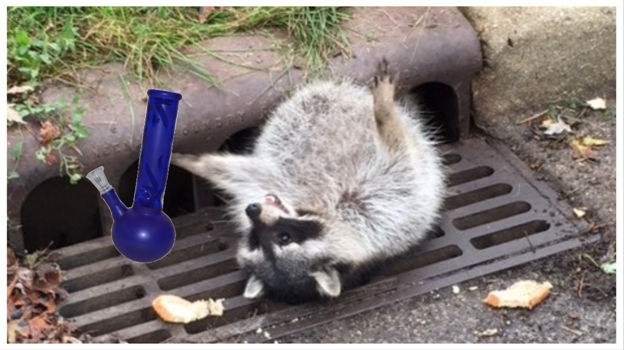 A Pet Raccoon Got High as Hell and Firefighters Had No Idea