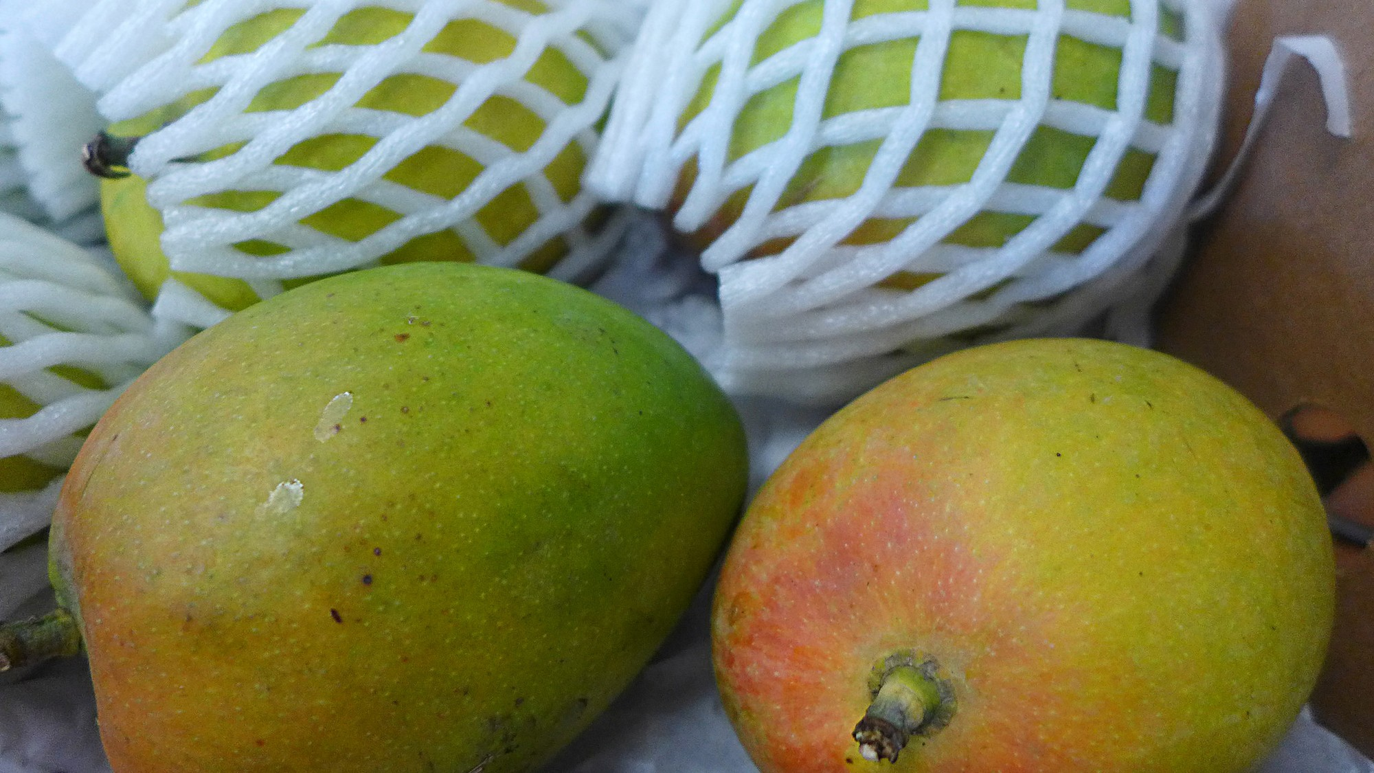 How to Get the World's Best Mangoes in the US, Right Now - VICE