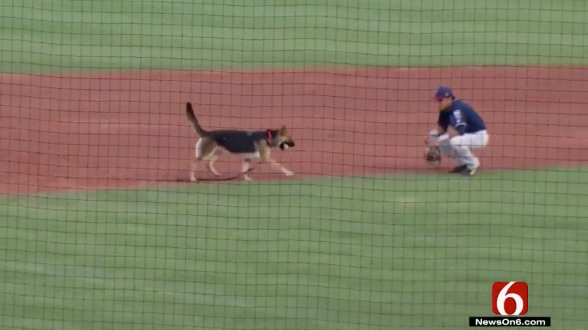 Insanely Good Dog Breaks Free at Baseball Game to Play Fetch with Fielder